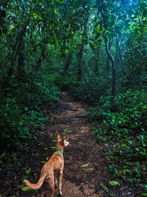 Rejuvenate in the monsoon trail to Kumara Parvatha #colourgreen