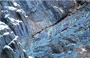 Snow Leopard Quest, Ladakh