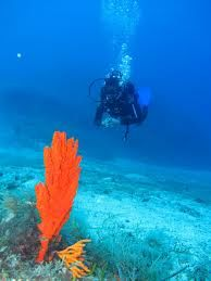 Best Underwater Dives in Mykonos, Greece