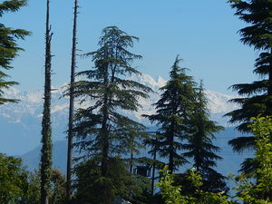 Kanatal – A quaint hamlet