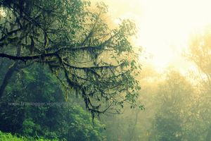 Vaithalmala : Raining and Trekking, so Rhyming!