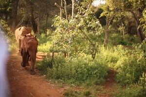 The story of how we adopted a baby elephant