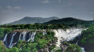 Bharachukki Falls 1/undefined by Tripoto