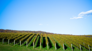 Travel The Wine Trails Of Virginia