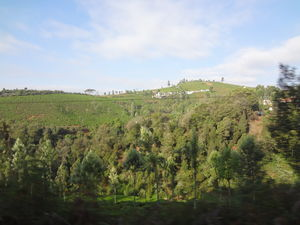 A tryst with the Nilgiris(Part 2): One Day in Ooty