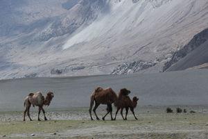 Dreamland Leh-Ladakh (Chapter 6)