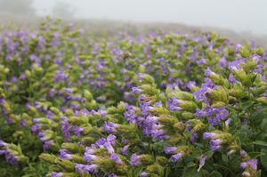 Valley of flowers - Kaas Plateau