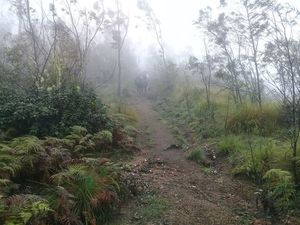 Meesapulimala Summit - trek to the wild side of Munnar