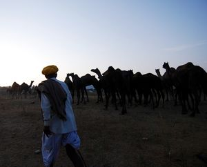 Magnetic and Enigmatic Pushkar
