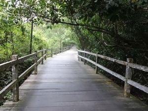 Permai Rainforest Resort Kuching Malaysia 1/1 by Tripoto