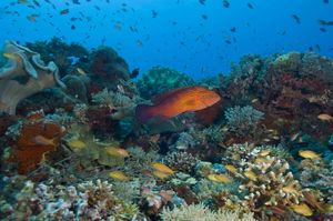 Apo Reef 1/undefined by Tripoto