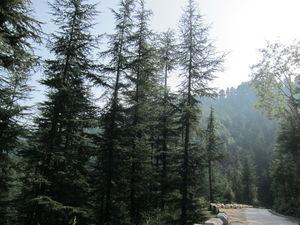 Himachal: Naldhera, Tattapani, Mashobra, Shimla