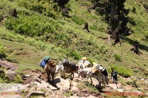 The Hamta circle adventure trail