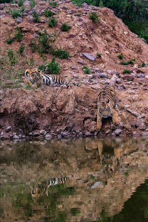 Wildlife Safari- Tadoba Tiger Reserve