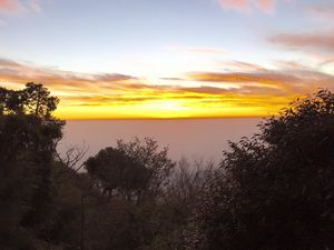 Into the Woods & Fresh Air : Kasauli
