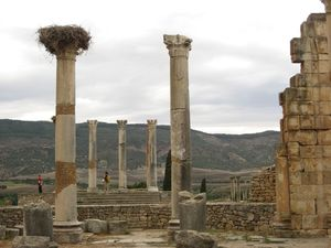 Volubilis 1/undefined by Tripoto