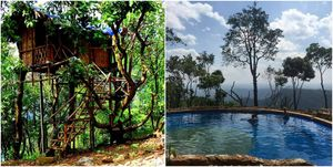 Chuck Backwaters In Kerala, Stay In A Real Treehouse And Dive In A Natural Infinity Pool Instead