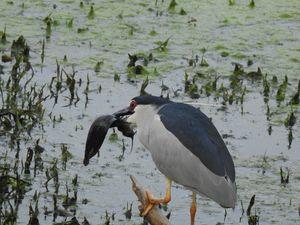 Bharatpur Bird Sanctuary - A World Heritage Site