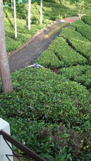 Tea Nest 1/11 by Tripoto