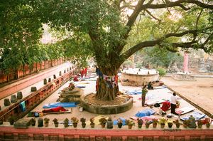 Bodhi Tree 1/undefined by Tripoto
