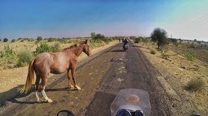 Royal Enfield Tour of Rajasthan Day 5