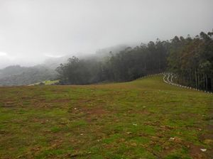 Long drive to Bandipur Tiger Reserves and places around Ooty