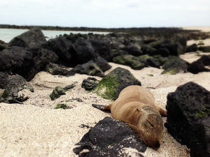 Galapagos Islands on a budget: Darwin's playground
