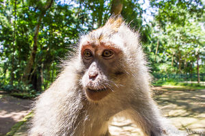 Sacred Monkey Forest Sanctuary - Ubud