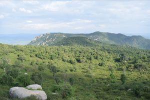 Trekking in Yelagiri Hills