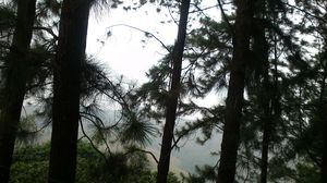 Vagamon: Bald and Beautiful
