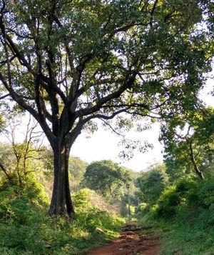 Trekking hamlet - Yelagiri