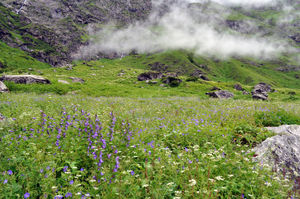 Valley of Flowers National Park 1/undefined by Tripoto