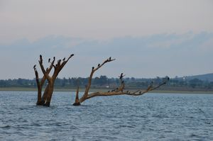 Kabini – A Paradise for Nature Lovers and Lazy People!