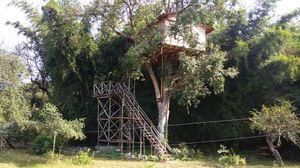 A Tree House Experience at Masinagudi