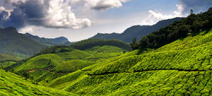 Munnar is Perfect for A Romantic Laid-Back Holiday