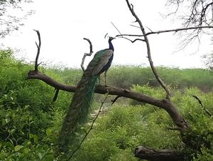 A Bird-Watching Tour to Keoladeo National Park Can Surely Turn You Into A Bird Lover