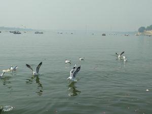 Triveni Sangam at Allahabad