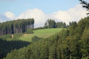 Blackforest is the new green...lush greenn