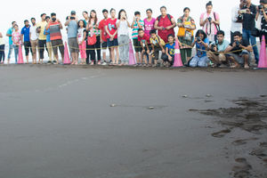 Turtle Festival in Velas