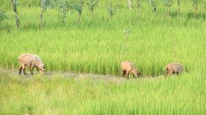 A weekend in Sundarbans