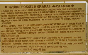 Into the Jurassic World – Akal Wood Fossil Park, Jaisalmer