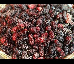 A berry affair in Mahabaleshwar