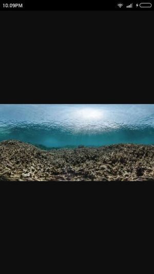 Coral reefs-Are there any chances of its revival