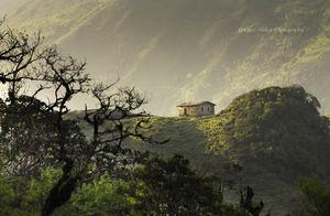 Of ravines, wildflowers and a Red Panda...Sandakphu