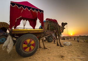 Pushkar through my lens