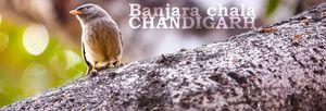 Banjara Chala Chandigarh