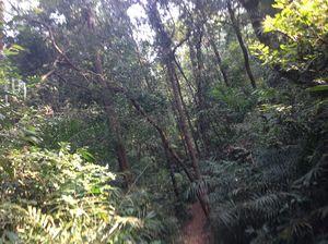 Kudumari Falls 1/undefined by Tripoto