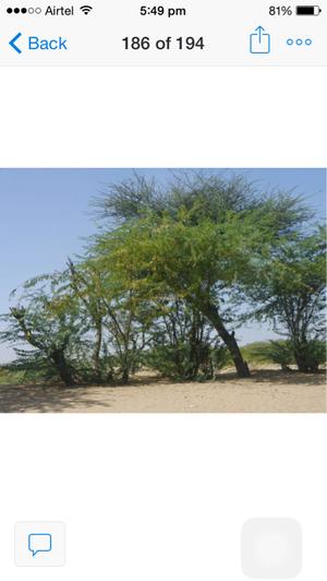 Petite yet mystique Jaisalmer