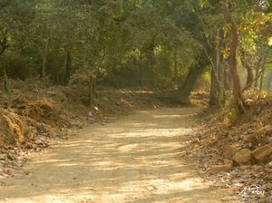 Solo Trek to Tungareshwar