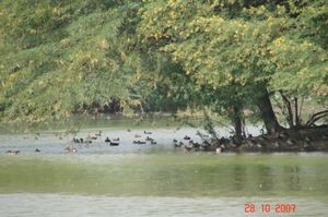 Sultanpur National Park Bird Sanctuary 1/1 by Tripoto